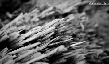 Torn timber