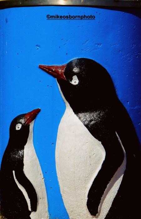 Penguin - the town where they make numerous appearances