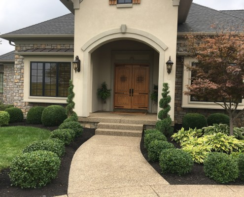 Professional Landscaping and Maintenance