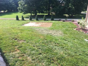 Sod Landscaping with Patio Paver