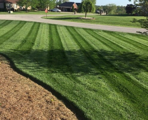 Freshly Cut Grass with stripes