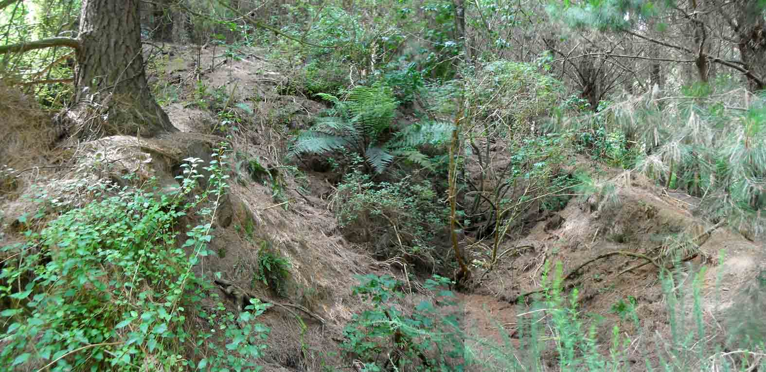 Triassic Period Plants Almost a Holocaust - t...