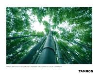 Tamron A037_Ito_1