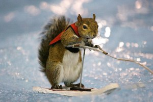 water skiing squirrel brad paisley river bank