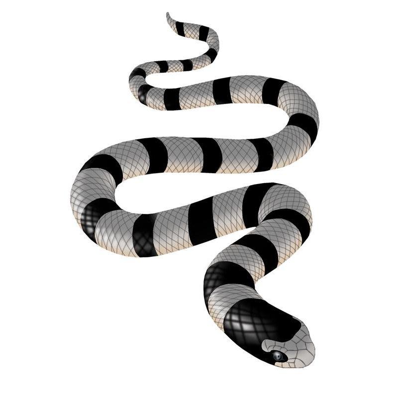 snake sq - snake-sq