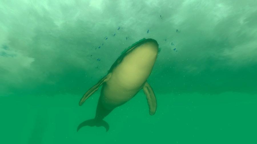 Deep Diving Adventures