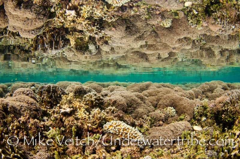 Hard Coral and Reflection