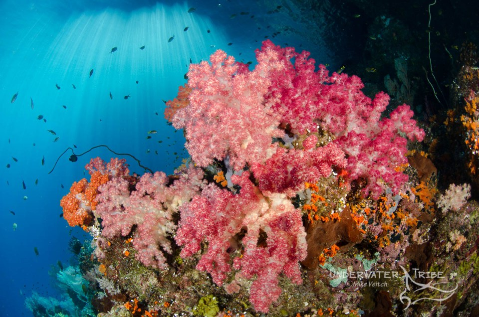 Soft corals in the shallows of Raja Ampat