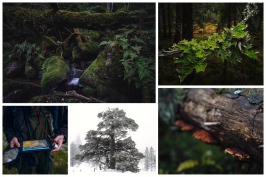 Collage skog