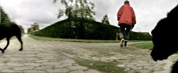 Suburbia - walking dogs