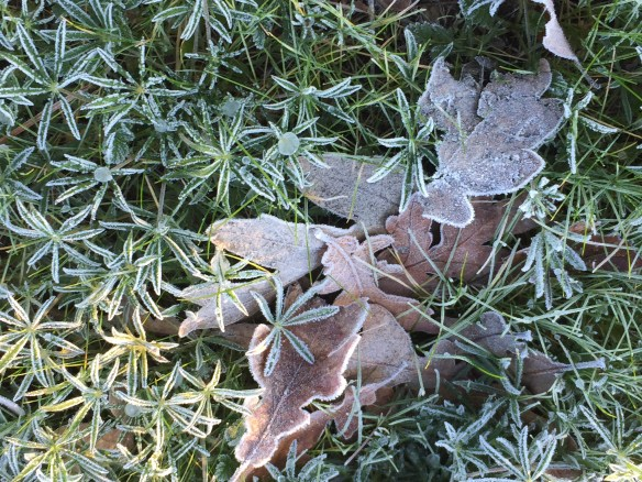 Frost made even ordinary leaves something spectacular