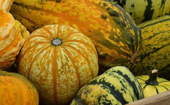 pumpkins-1642289_960_720