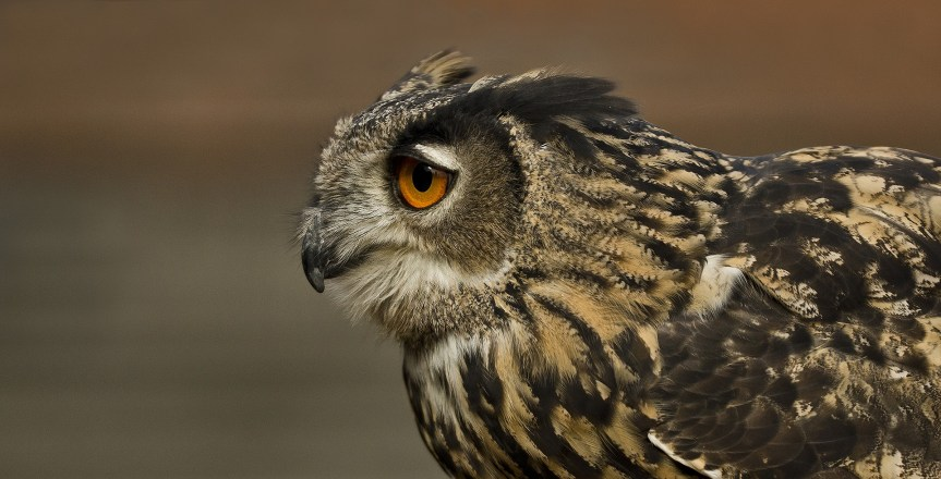 Morning Encouragement for Night Owls