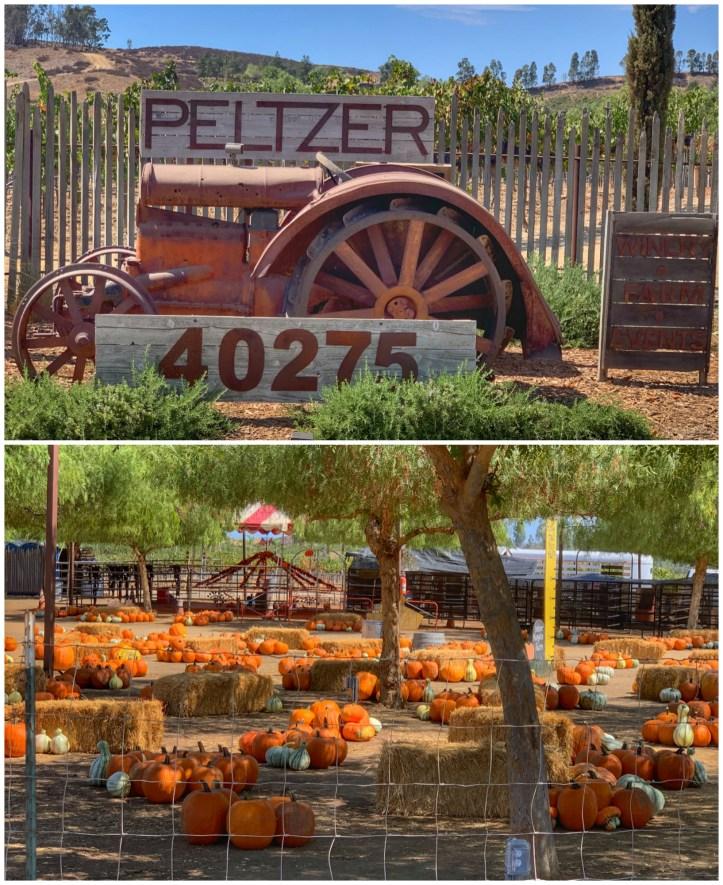 Peltzer1