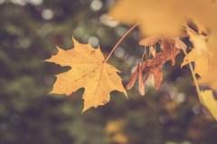 43_jesen v detailoch