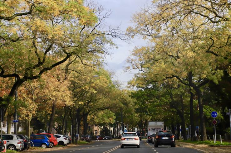 【フランクフルトx秋】紅葉と雨と冬支度