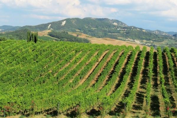 виноградники - эно туризм Италия