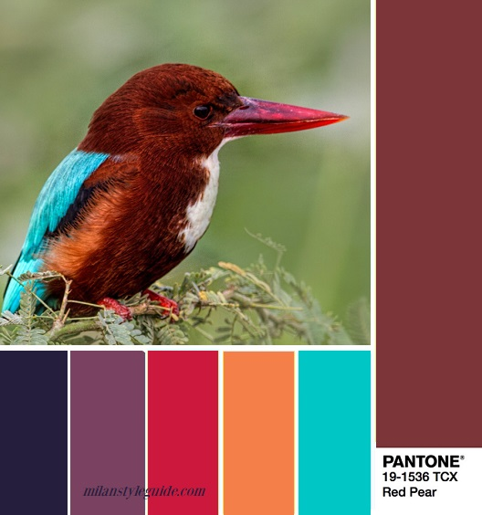 PANTONE 19-1536 Red Pear – Красная груша