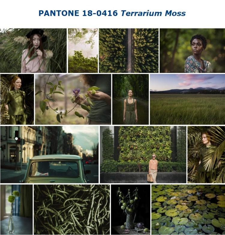 PANTONE 18-0416 Terrarium Moss террариум мох