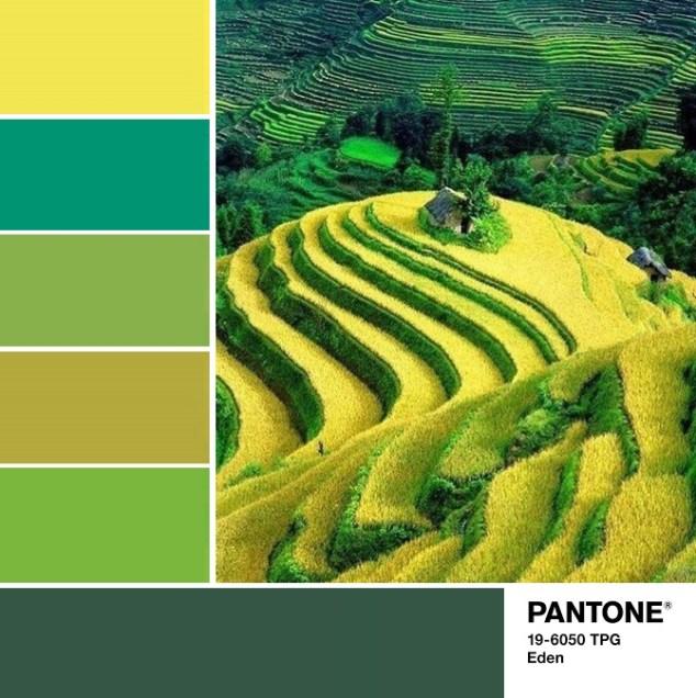 Pantone 19-6050 Eden palette