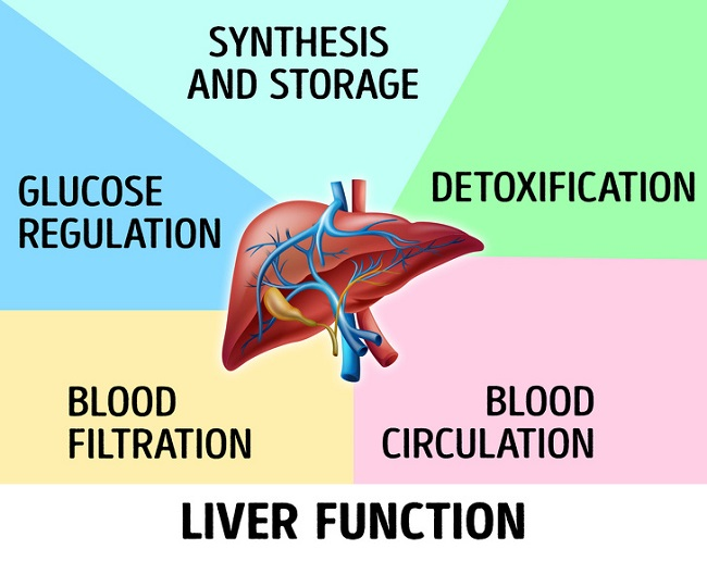 Your liver works very hard
