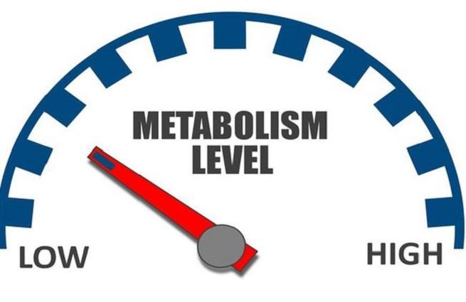 Slowed Metabolism