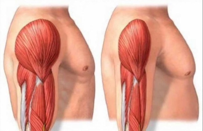 Your muscles decrease in mass