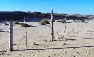 Beach Art 5.5 out of 10