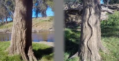 Wiradjuri art at Ponto Falls near Dubbo