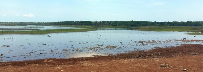Cobourg wetlands