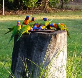 Batchelor Birds