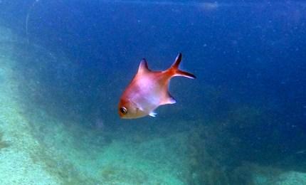 Mr rockpool fish