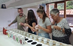 Professional Tea Tasters