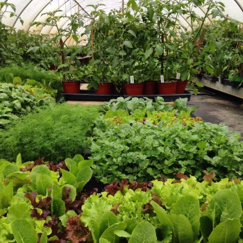 Vegetable Plant Selection