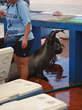 The resident sea lion caught his own fish.