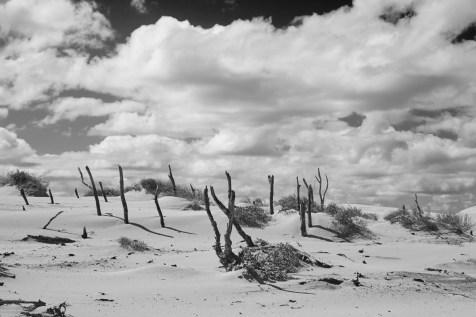 Wüste, black and White, Sanddünen, Dünen, Australien, Australia, Morimi Nationalpark
