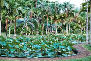 Jardin Pamplemousse Maurice