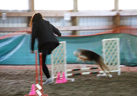 Our 1st Agility Fun Match