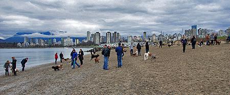 Miles' First Big Dog Park