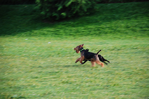 Summer, Zooming By