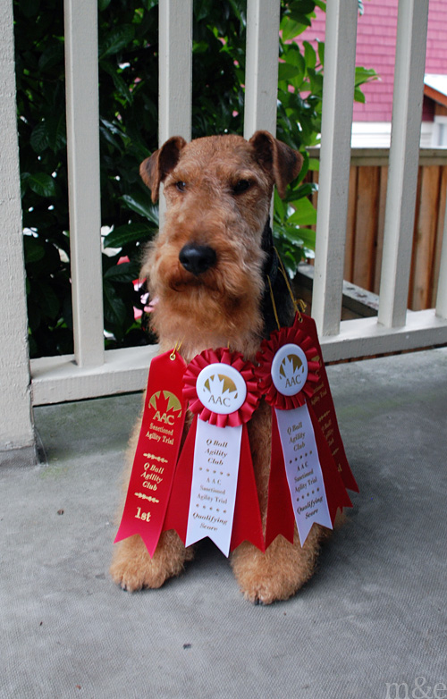 Sweet, Sweet, Hard-Earned SUCCESS! </br>The Tale of Our Second Agility Trial