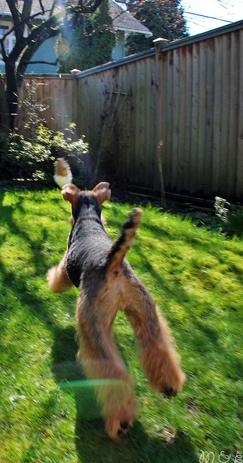 Luring: Canine Instinct, History, and at-Home Fun