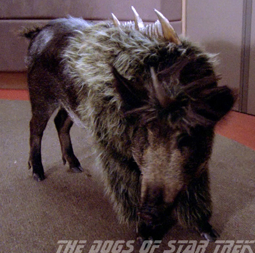 The Dogs of <i>Star Trek</i>