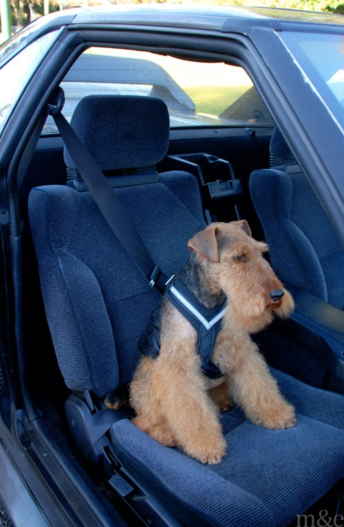 The AllSafe Dog Harness