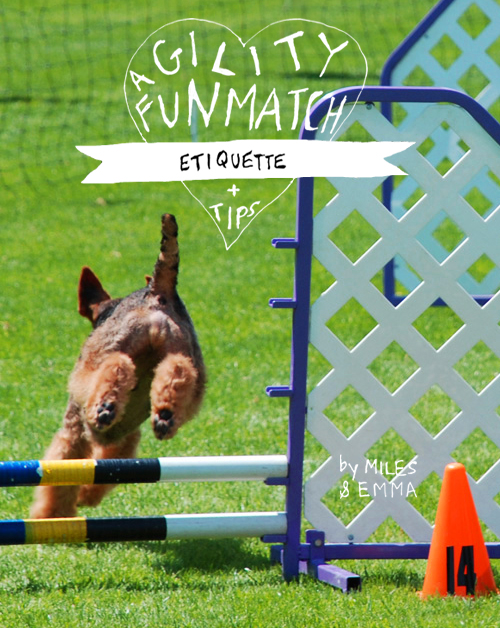 Agility Fun Match Etiquette & Tips