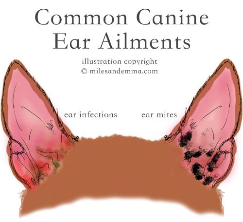 Canine Ear Health Guide