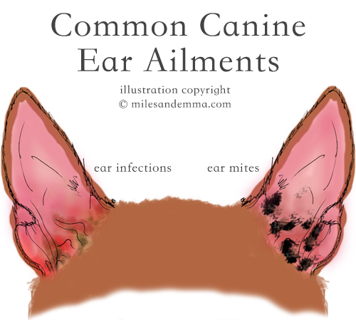 Canine Ear Health Guide