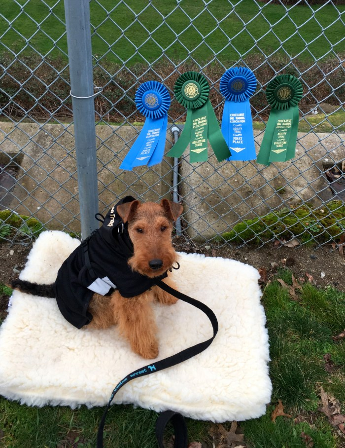 Our First AKC Agility Trial
