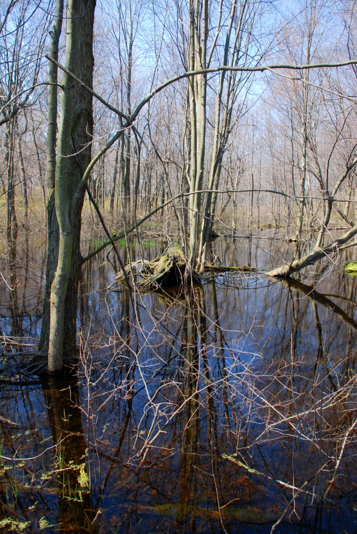 Point Pelee National Park: </br><i>Woodland Nature Trail</i>