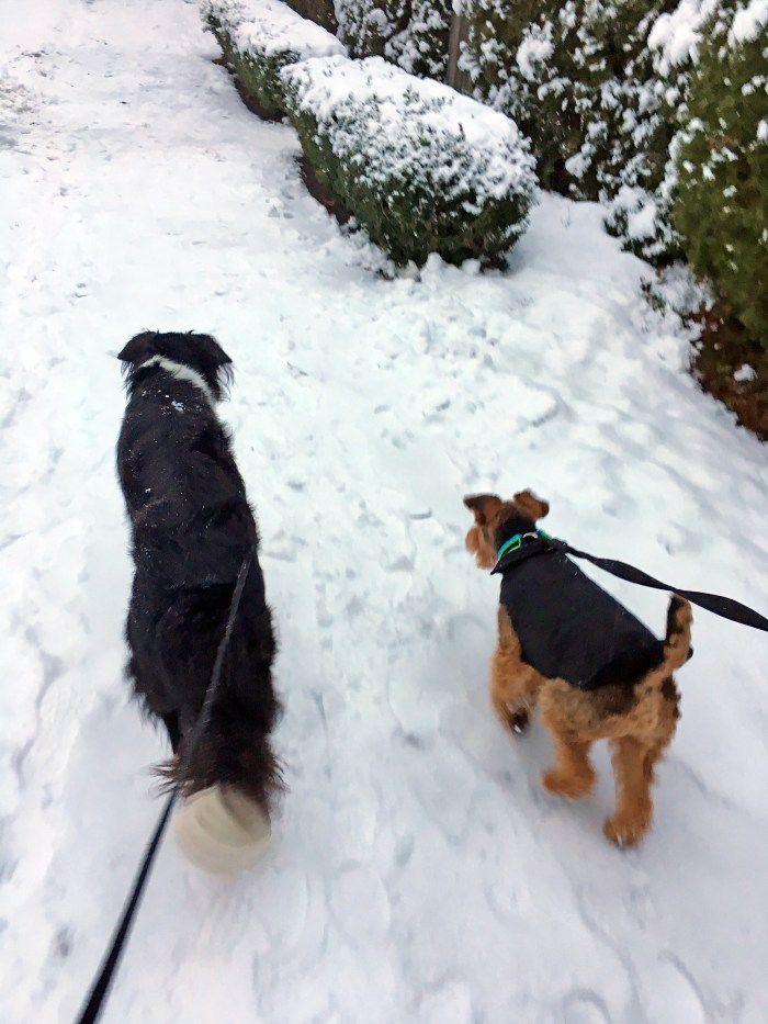 A Snow Day with Miles & Spencer